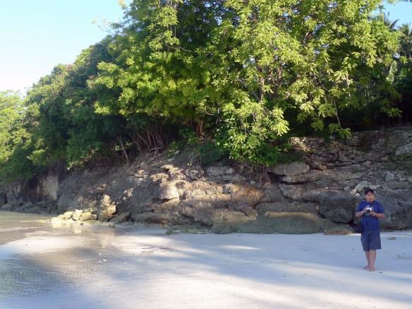green leafy cliff
